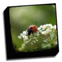 Picture it on Canvas 'Ladybug' Wall Art on Canvas   Wayfair