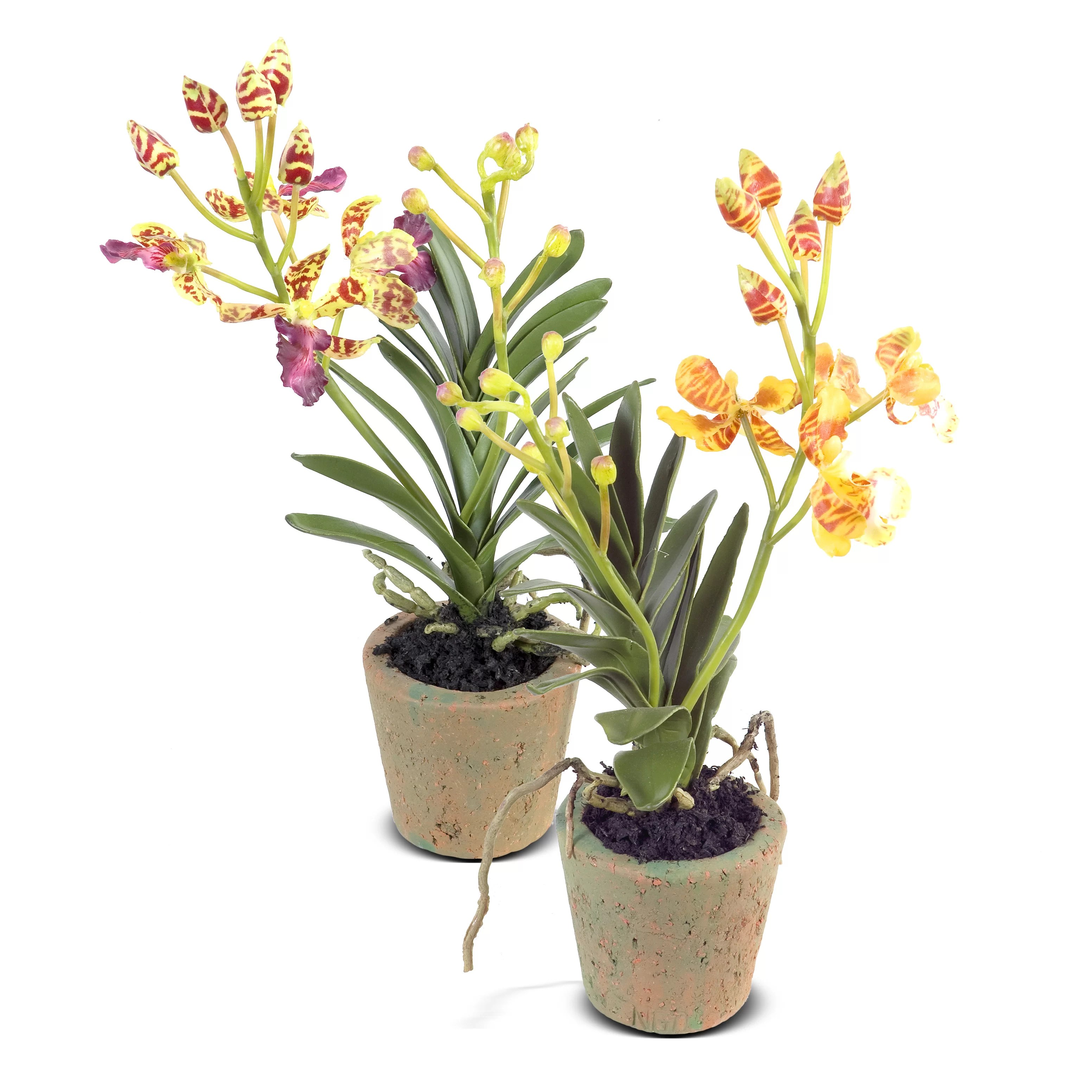 New Growth Designs Faux Vanda Orchid Flower In Pot Wayfair