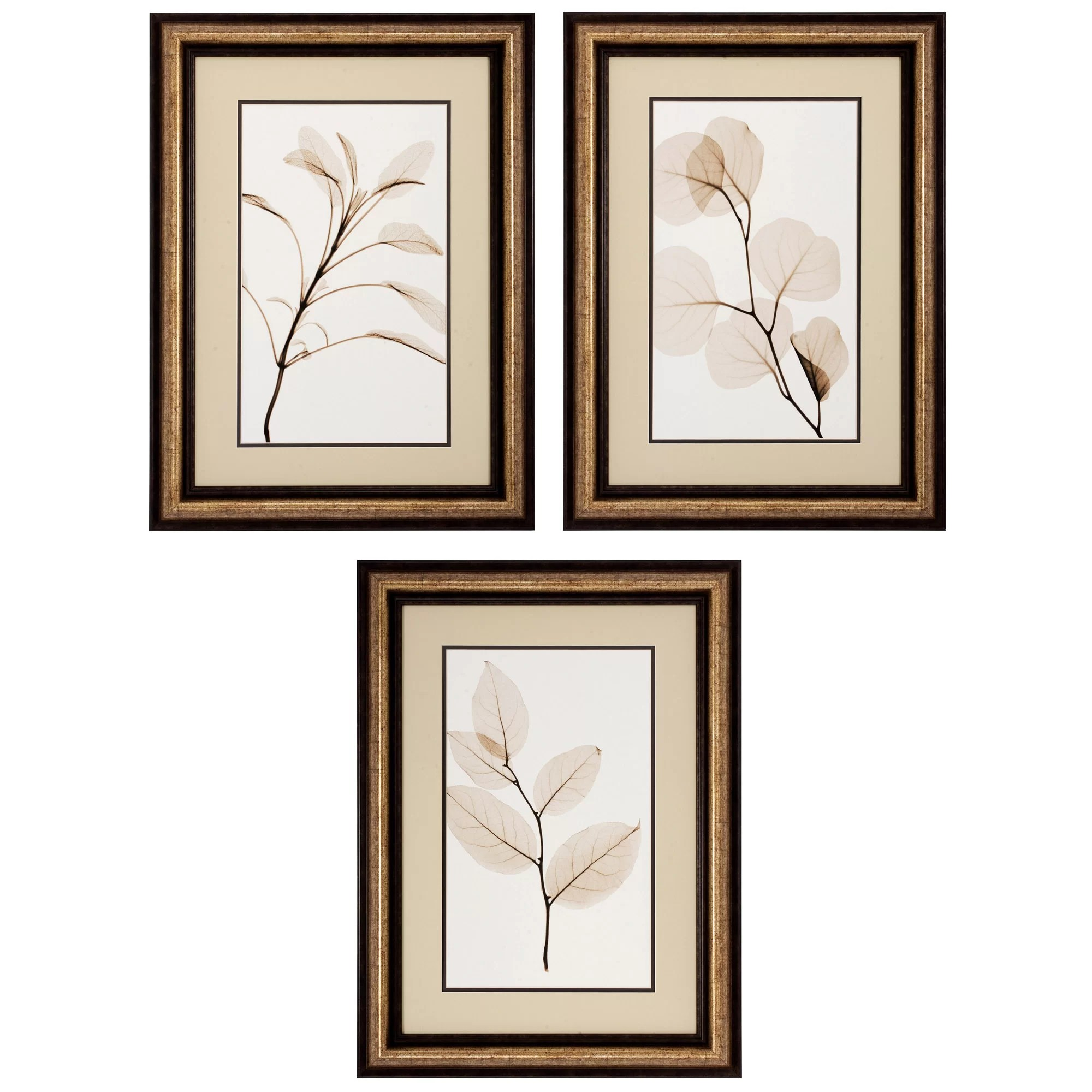 Framed Wall Art Sets Of 3 Propac Images Sage Salal Eucalypt 3 Piece Framed Graphic