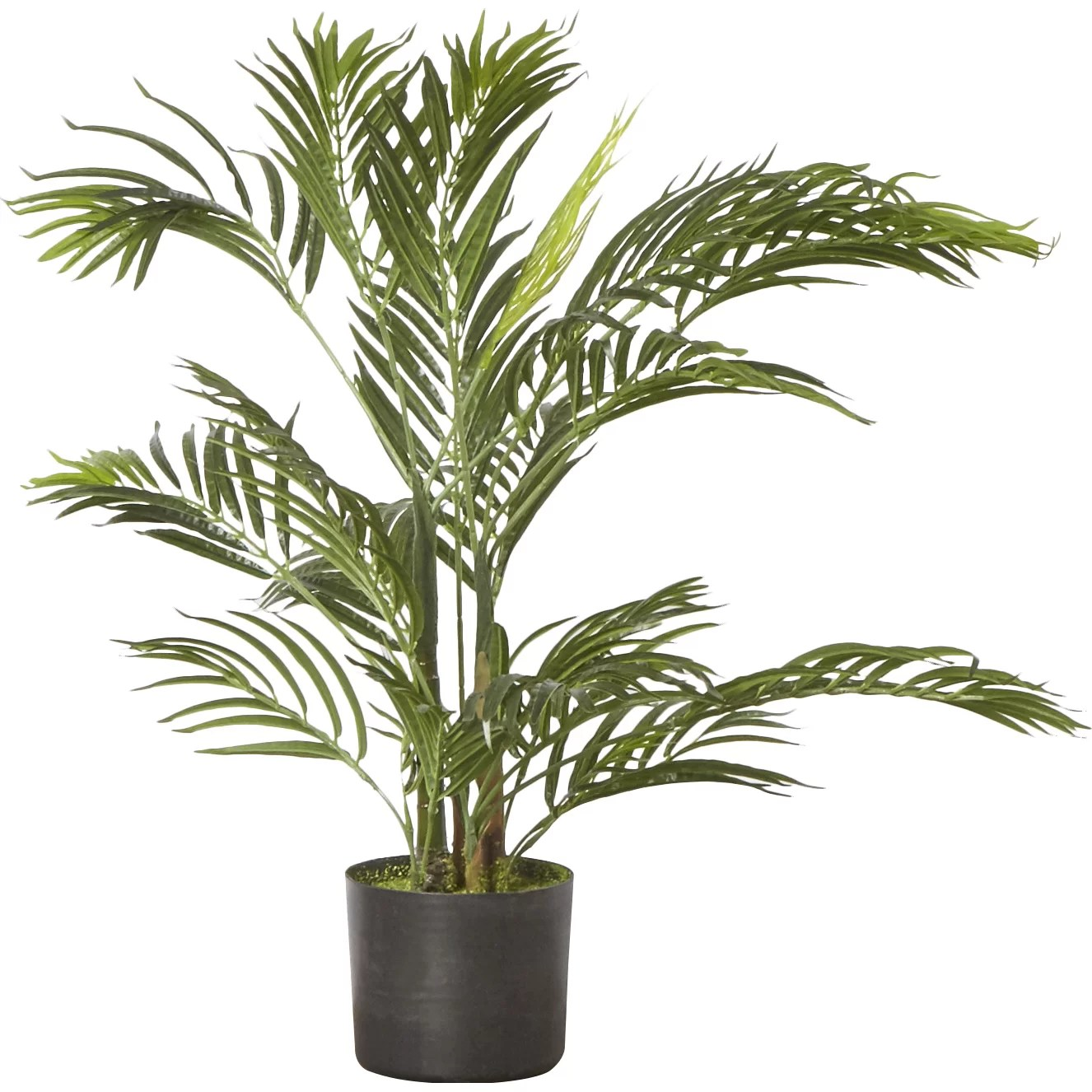 Palm Areca Bay Isle Home Areca Palm Tree Floor Plant And Reviews Wayfair