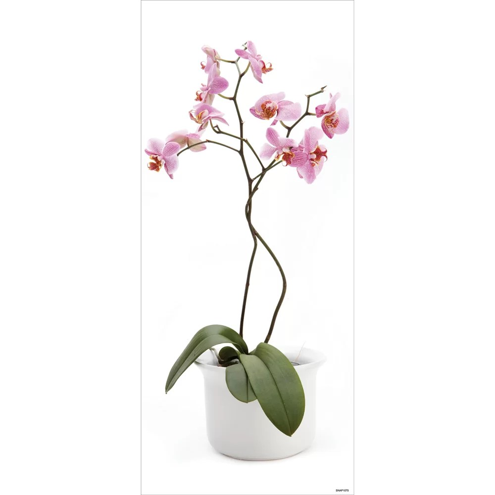 Blue Mountain Orchid Wall Decal & Reviews