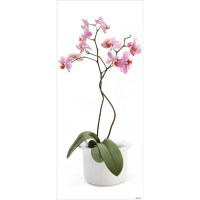 Blue Mountain Orchid Wall Decal & Reviews | Wayfair