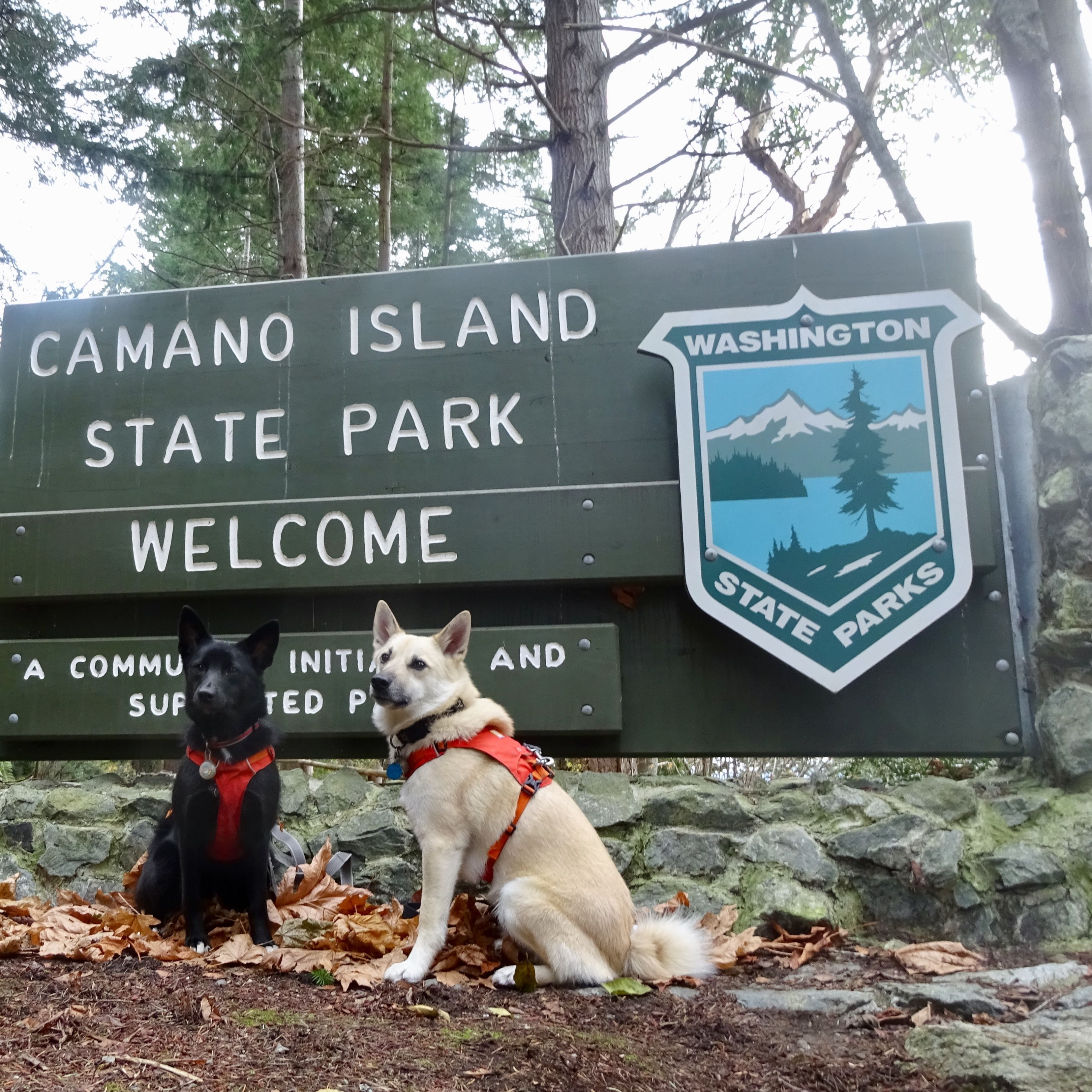 Camano Island State Park Weather Photos North End Hikes And Walks With Dogs Edmonds Wa Meetup