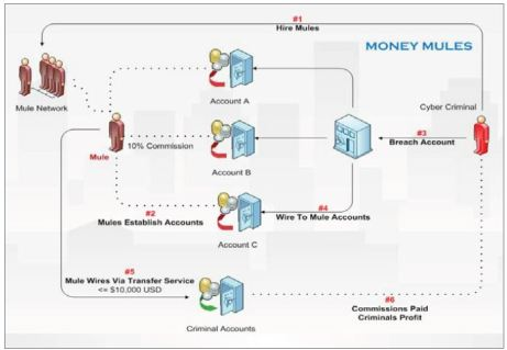 MoneyMules