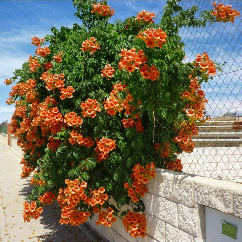 Asiatische Moringa Https Seeds Gallery Shop De Daily 1 Https Seeds