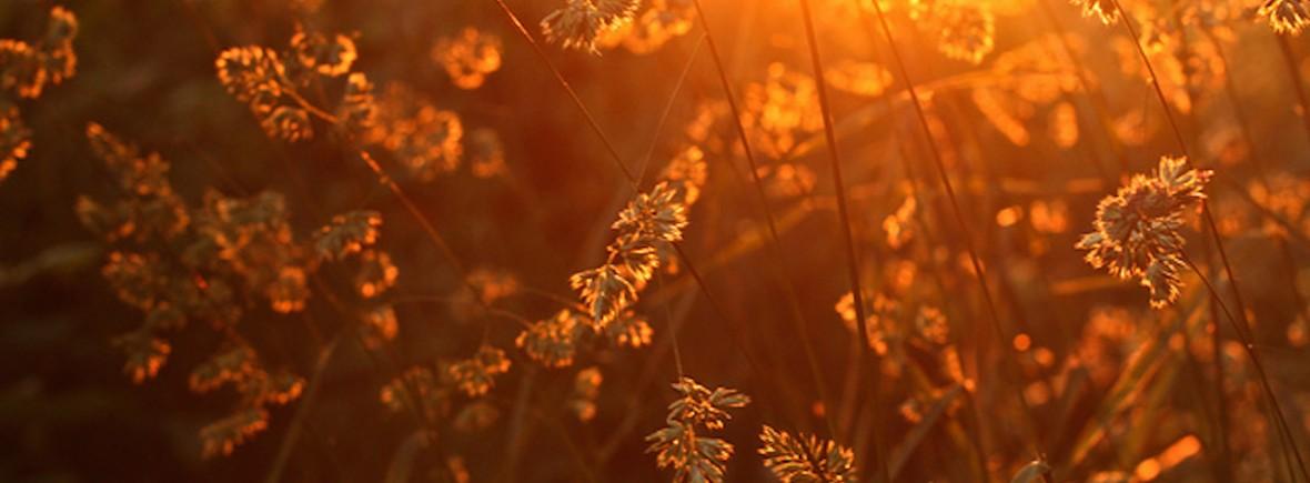 Sunlight_geezaweezer-1180x435