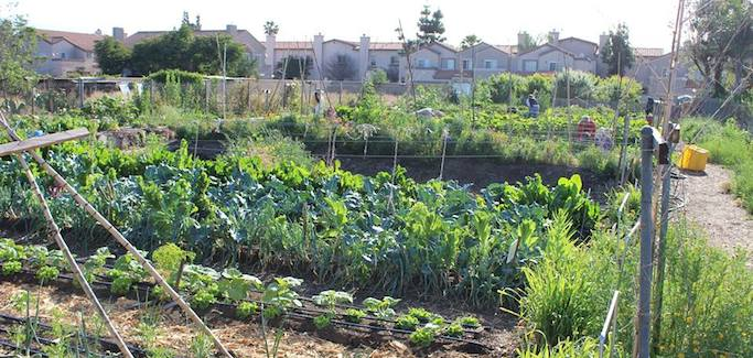 Backyard Farm Blossoms into Thriving Urban Agriculture