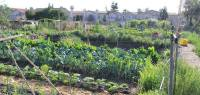 Backyard Farm Blossoms into Thriving Urban Agriculture ...