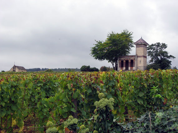 vineyard-houses