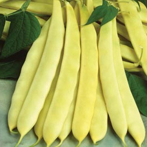 Broccoli Flower Dwarf-french-bean-capitano-30-seeds-5083-p.jpg
