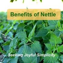 Benefits of Nettle