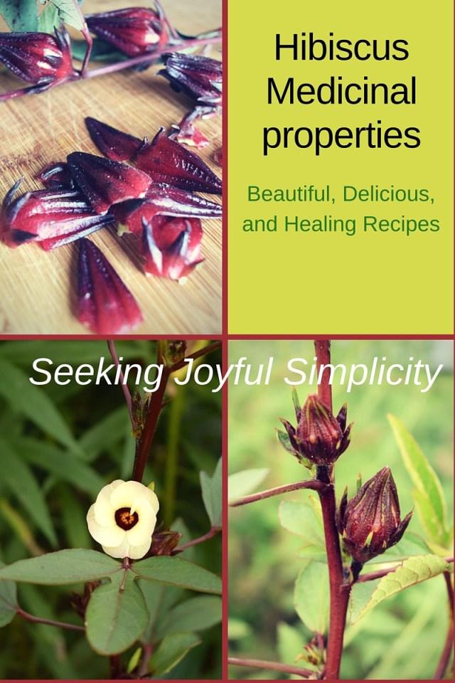 Hibiscus Flower Medicinal Properties