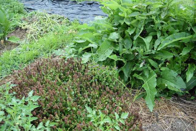 All Heal and Comfrey