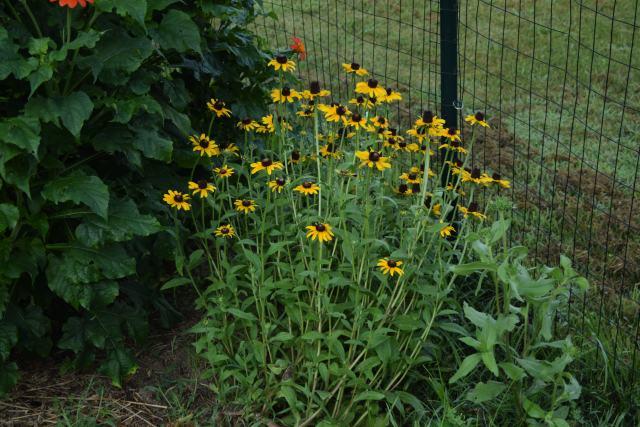 July Garden 7