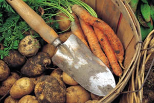 naturalne jedzenie a odchudzanie
