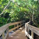 Mangrove Walkway - Complete 2015BKS (12)