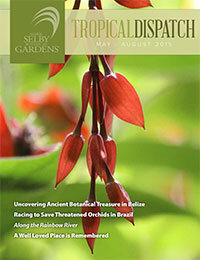 http://i0.wp.com/selby.org/wp-content/uploads/Tropical-Dispatch-May2015-cover.jpg?fit=200%2C260