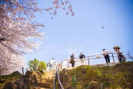 お花見の穴場スポット!新宿区の箱根山って知ってる?