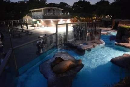 ナイトズーで夜行性の姿を満喫! 関東の人気「夜の動物園」5選