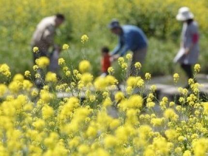 花粉症は春だけじゃない!秋の花粉症にご注意を~対策法~