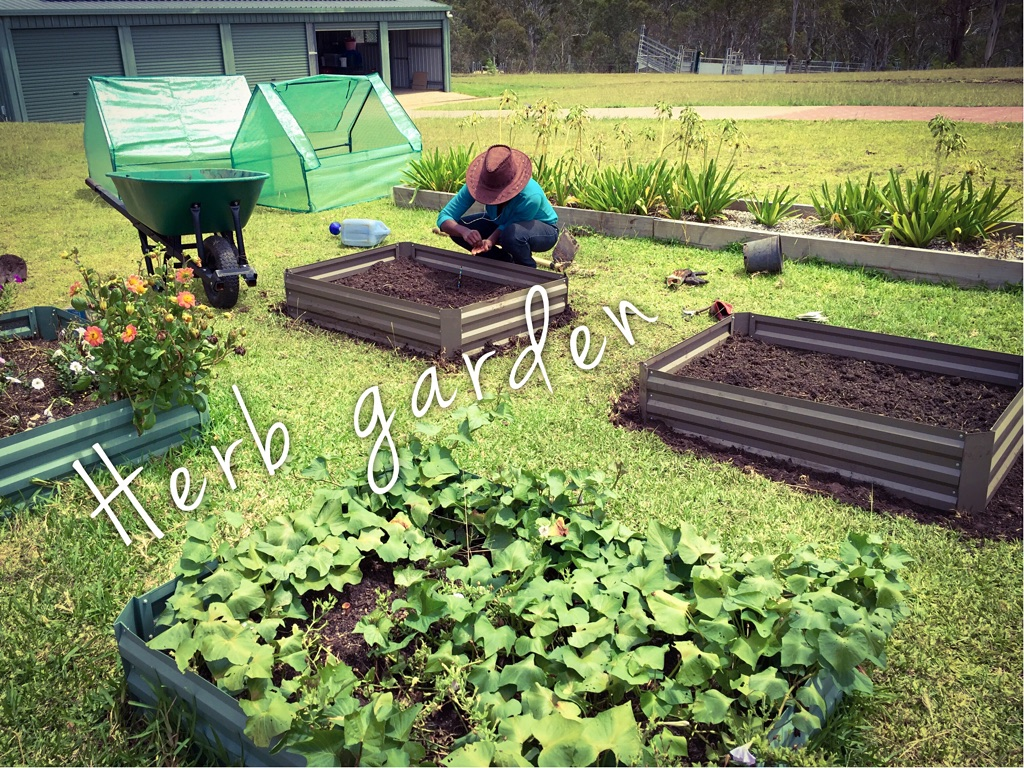 Aldi Garden Beds Setting Up The Herb Garden Self Sufficient Culture