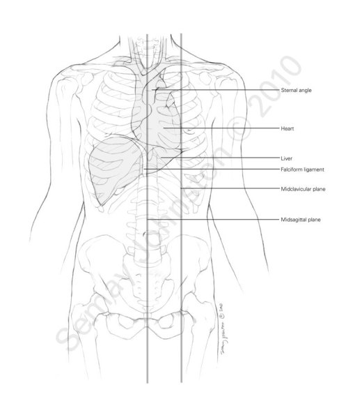 Magnificent Organ Locations In The Body Anatomy Organ Auto Electrical Wiring Wiring Digital Resources Cettecompassionincorg