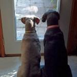 Tess & Purdie