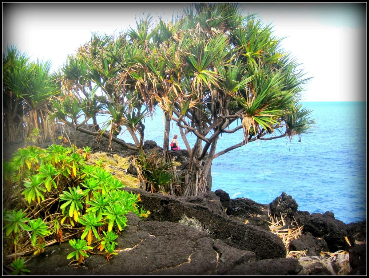 La Réunion terre de mélange et de merveilles