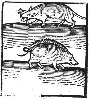 """The """"Crimacius & Ermineus"""" in the 1497 Hortus Sanitatis, De Animalibus Capitulum lviii"""