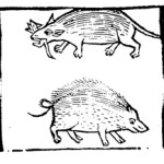 """The """"Ermyne"""" and the """"chirogrillus & erinatius... all one"""" from Doesburg's The Noble Lyfe & Natures of Man, p. 43"""