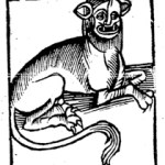 "The ""Leopardus or the leoparde"" from Doesburg's The Noble Lyfe & Natures of Man, p. 52"
