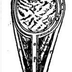 The mediate eye in Crooke's 1615 Mikrokosmographia (Microcosmographia). Distorted in this scan. Page 555.