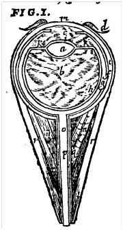 The mediate eye from the 1634 English translation of Pare. Page 185.