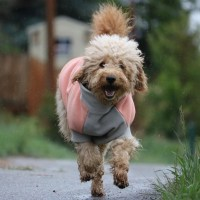 Dog Fleece Coat With Velcro Easy Wrap | Dog Fleece Jacket ...