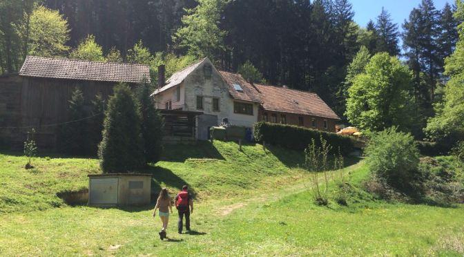 Rundwanderung zum Drachenfels in der Pfalz