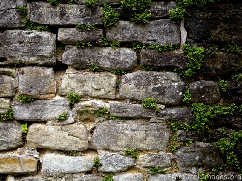 free-stock-images-old-stone-wall-green-plants-19 | Sequence33