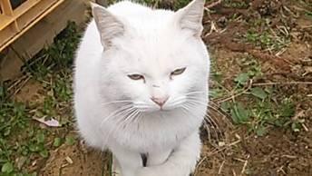 農場に捨てられた頃の白玉。真っ白だった毛並みは日増しに汚れ、痩せていきました。