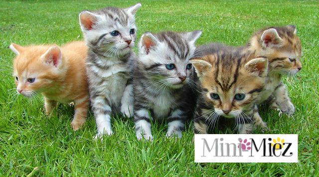 Mini-Miez Partners with Serve the City