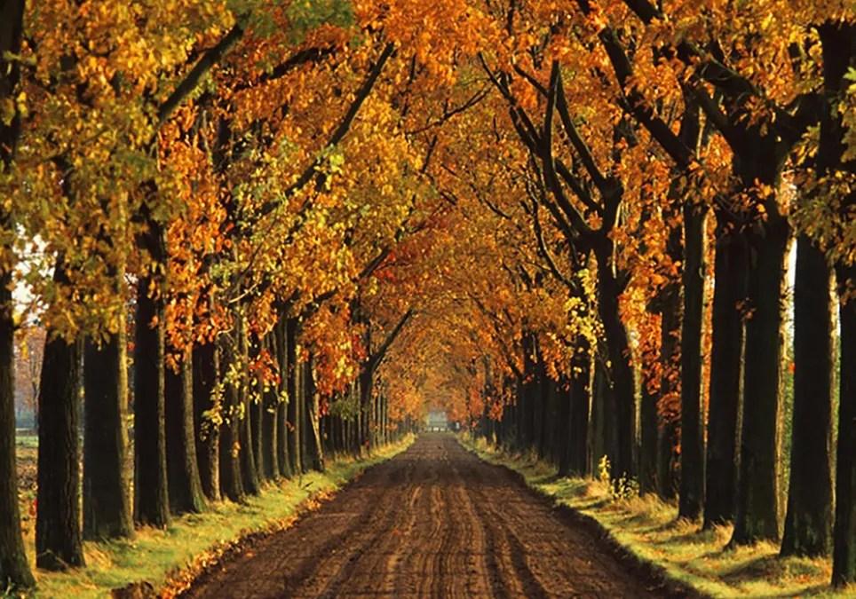 Fall Hd Wallpaper Pictures 191 C 243 Mo Es El Oto 241 O En Argentina