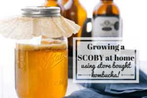 Brewing Kombucha at Home: How to Grow a SCOBY!