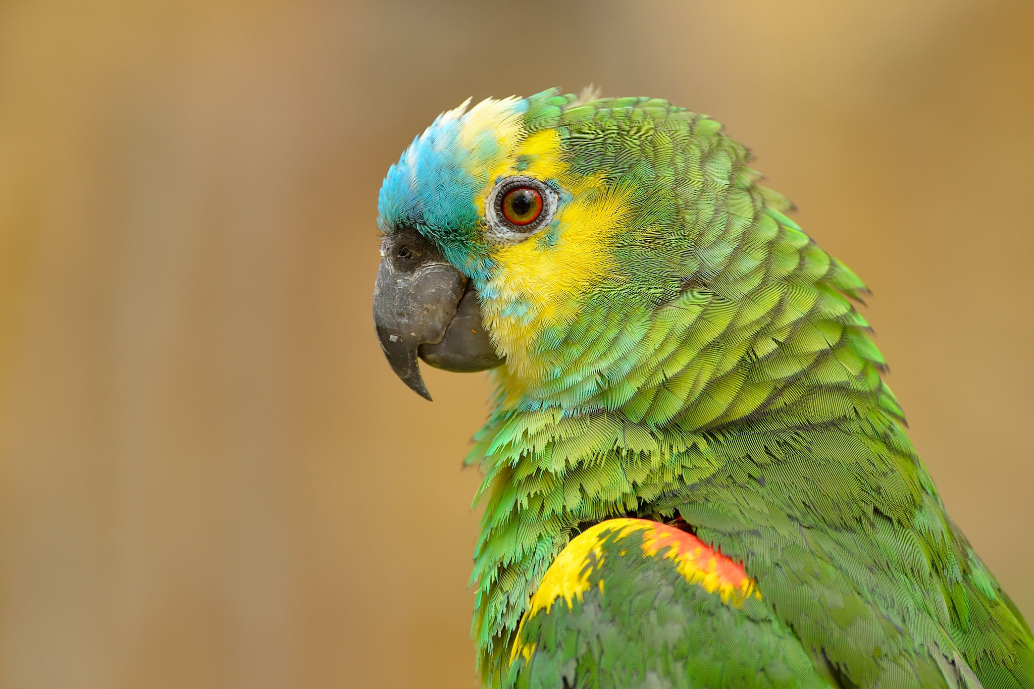 Parot Wallpapers Parrot Wallpapers 40 2048 X 1365