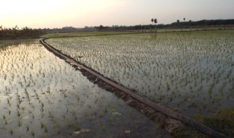 agriculture (4)