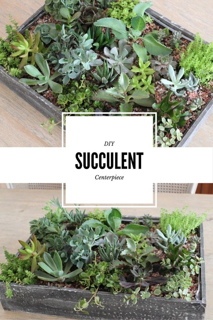 DIY Succulent Centerpiece
