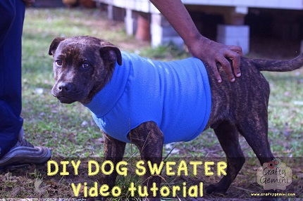 Video tutorial: Fleece dog sweater