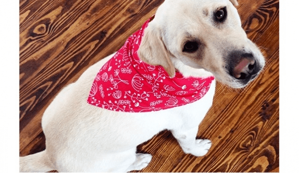 Free pattern: Dog Bandana in three sizes
