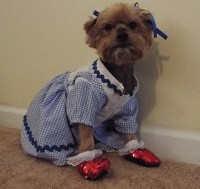 Simplicity 2548 Wizard of Oz Dog Costumes In Three Sizes