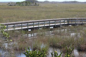 Walkway in the Everglades