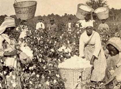 Enslaved Blacks picking cotton