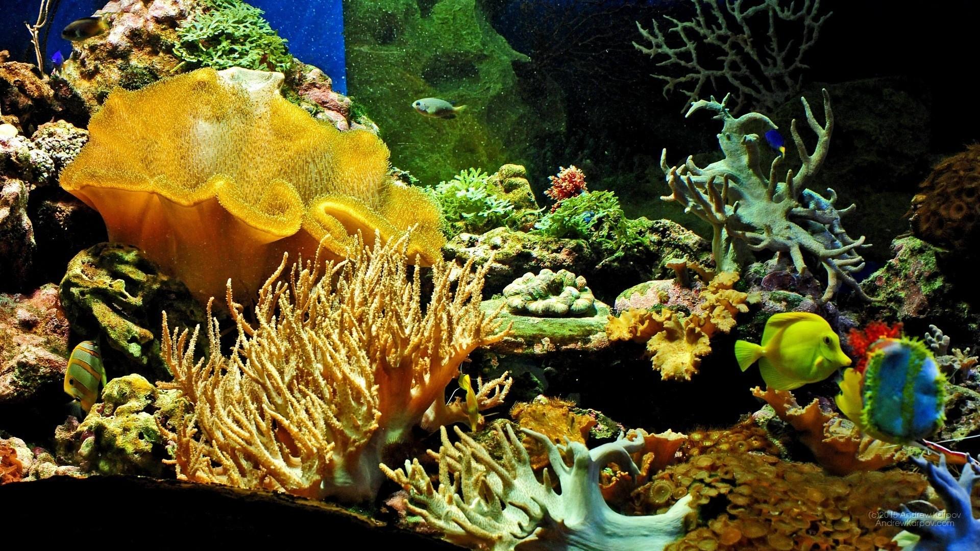 Download Wallpaper Aquarium 3d Sfondi Acquario 61 Immagini