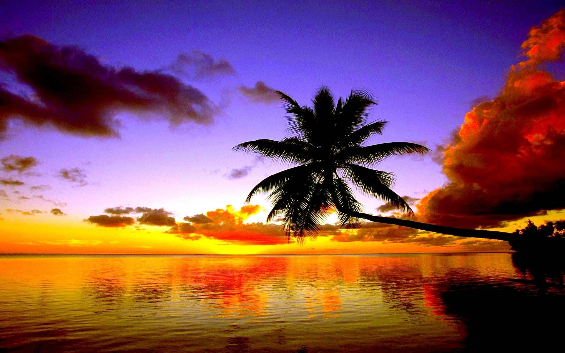 Palm Tree Iphone Wallpaper Beach Sunsets Wallpaper Sf Wallpaper